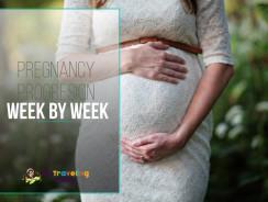 Pregnancy Progression: Week by Week Pregnancy
